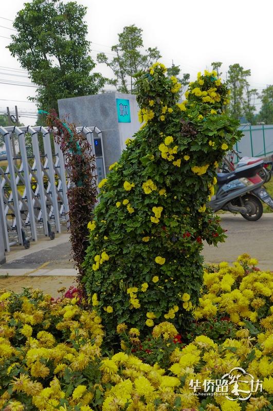 菊花植物造型隐藏12生肖