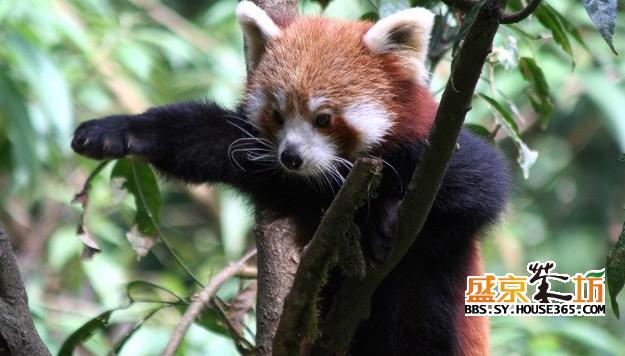 盘点20种世界最萌的野生动物